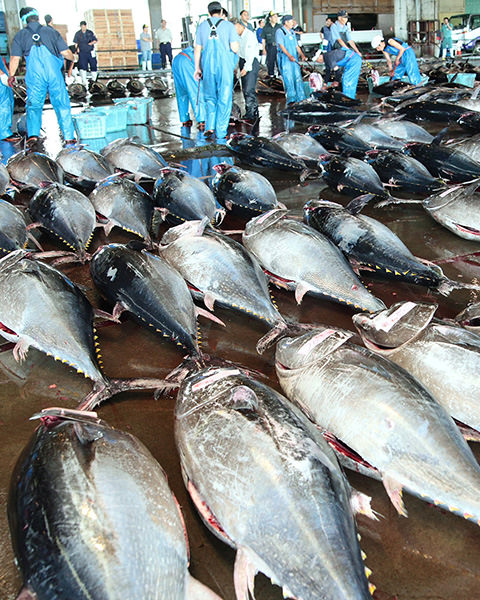 Shiogama Seafood Wholesale Market