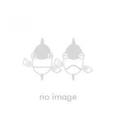 bg_no-image